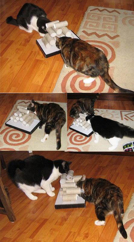 CatSurprise